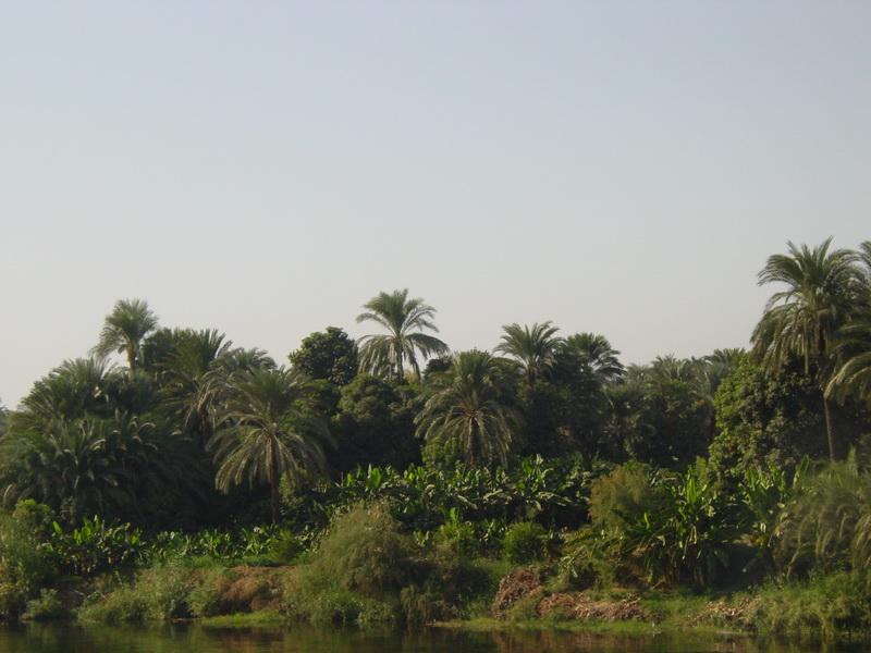Arke-Egypt-085