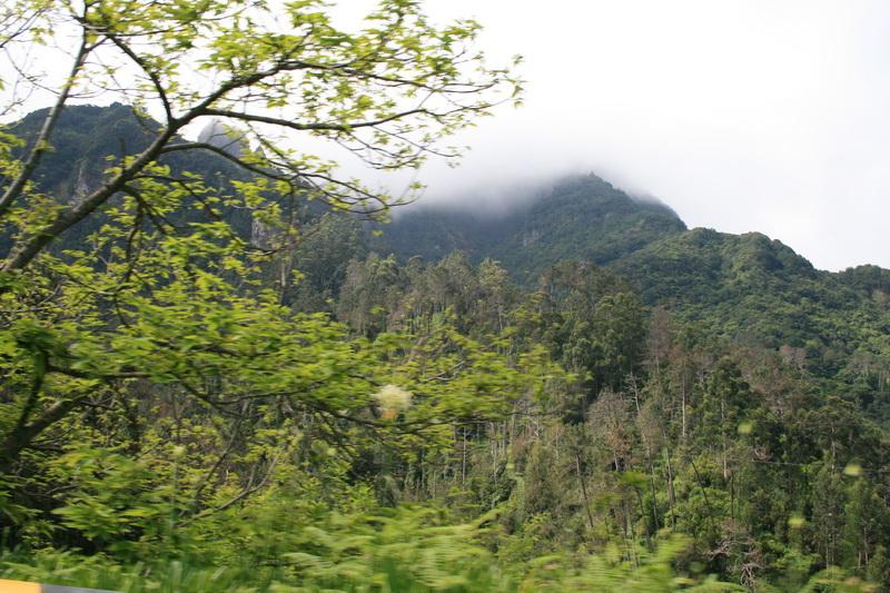 Arke-Madeira-329
