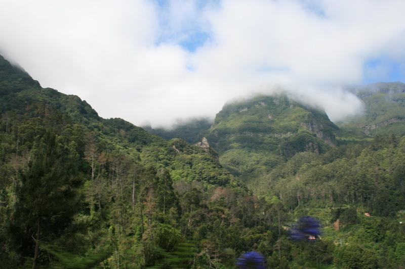 Arke-Madeira-330