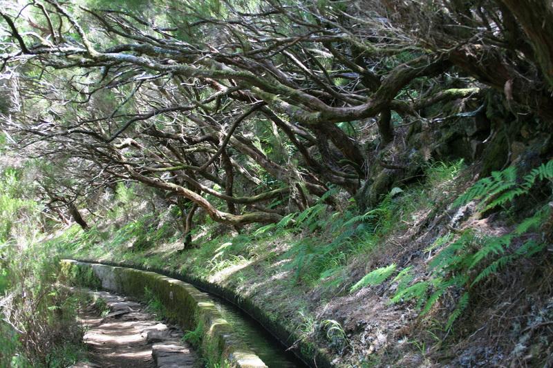 Arke-Madeira-380