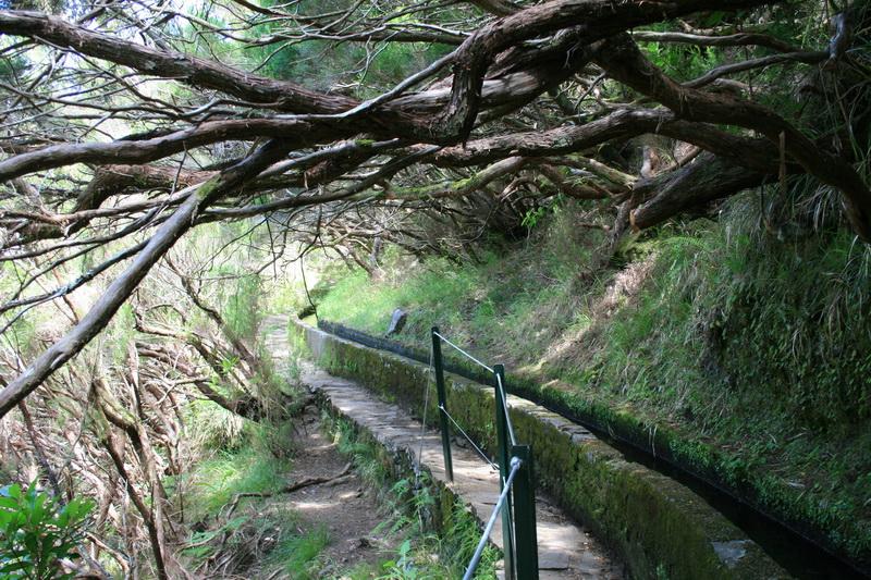 Arke-Madeira-381