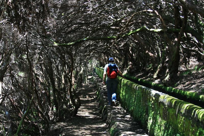 Arke-Madeira-385