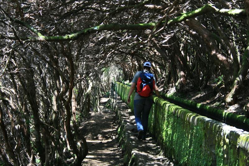 Arke-Madeira-387