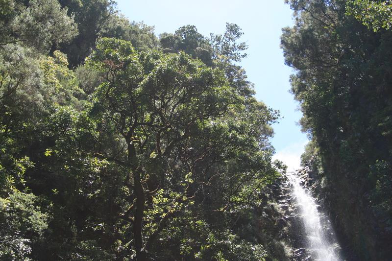Arke-Madeira-401