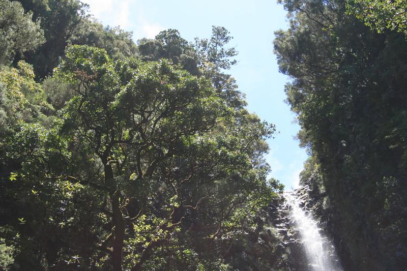 Arke-Madeira-404