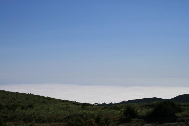 Arke-Madeira-417