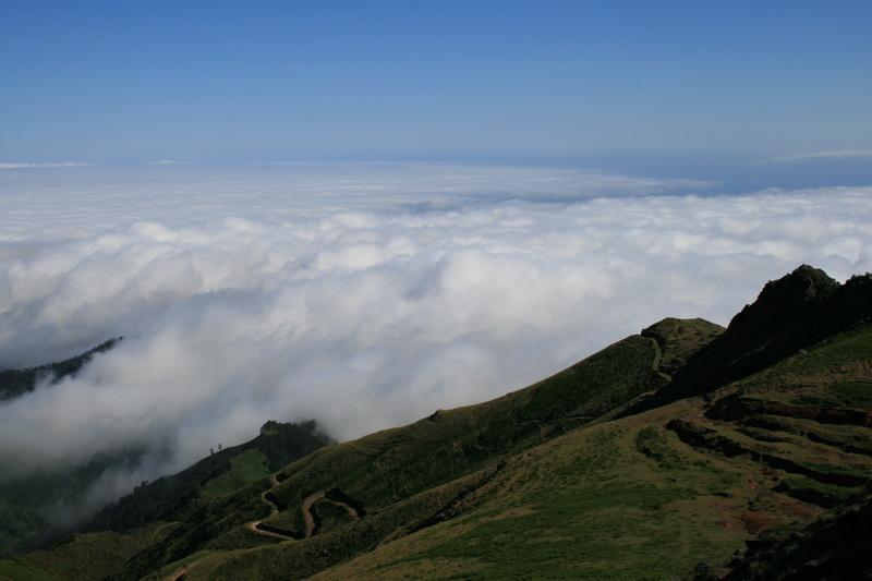 Arke-Madeira-440