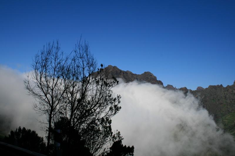 Arke-Madeira-464