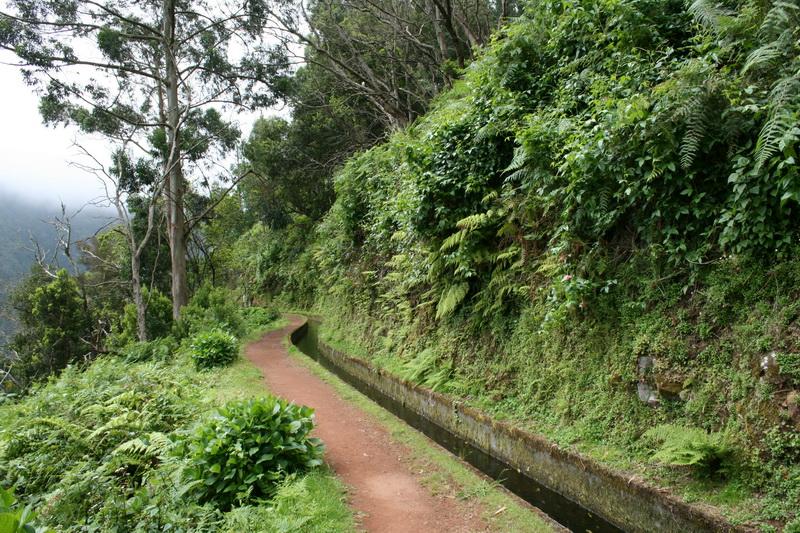 Arke-Madeira-489