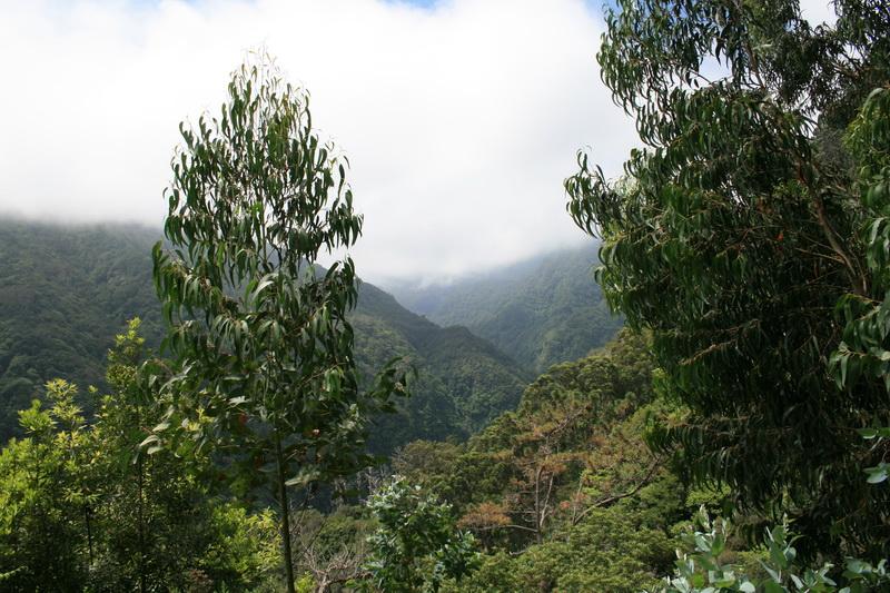 Arke-Madeira-500