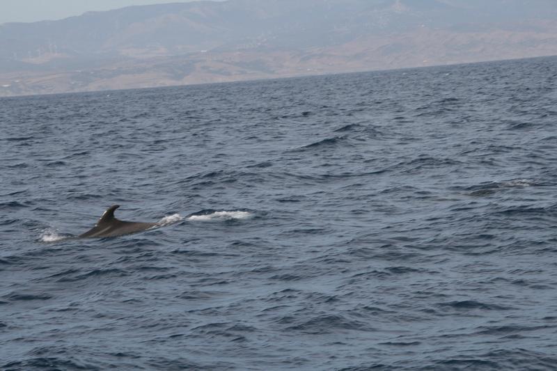 Marbella-2010-099