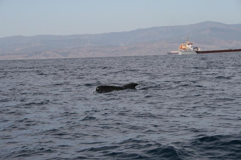 Marbella-2010-102