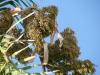 Marbella-2010-002