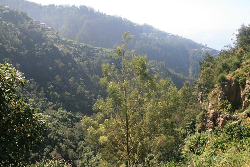 Arke-Madeira-055