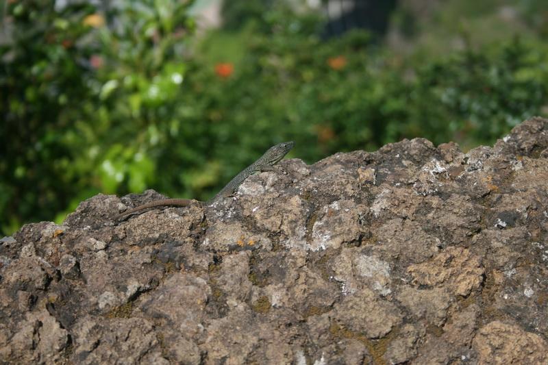 Arke-Madeira-076