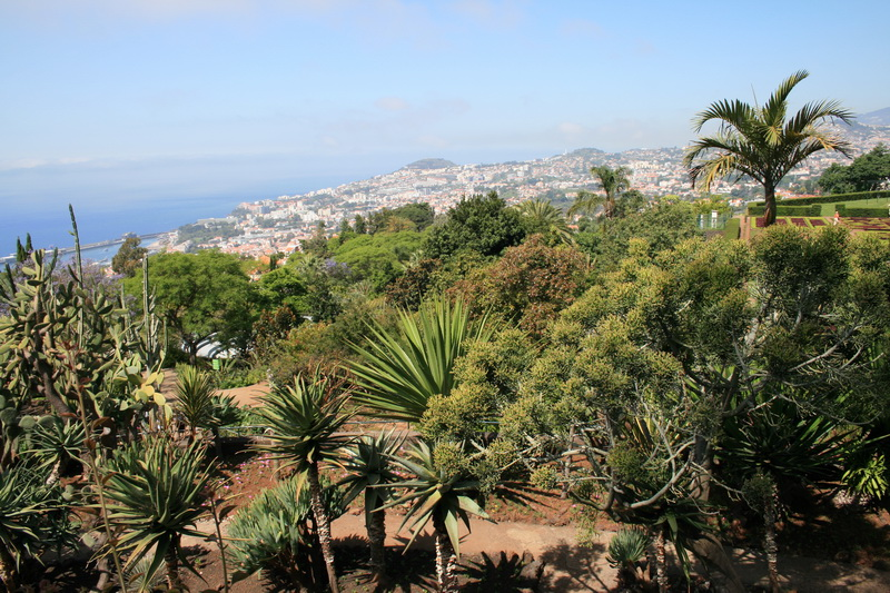 Arke-Madeira-093