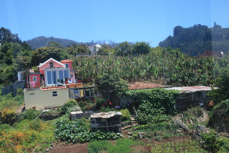 Arke-Madeira-298