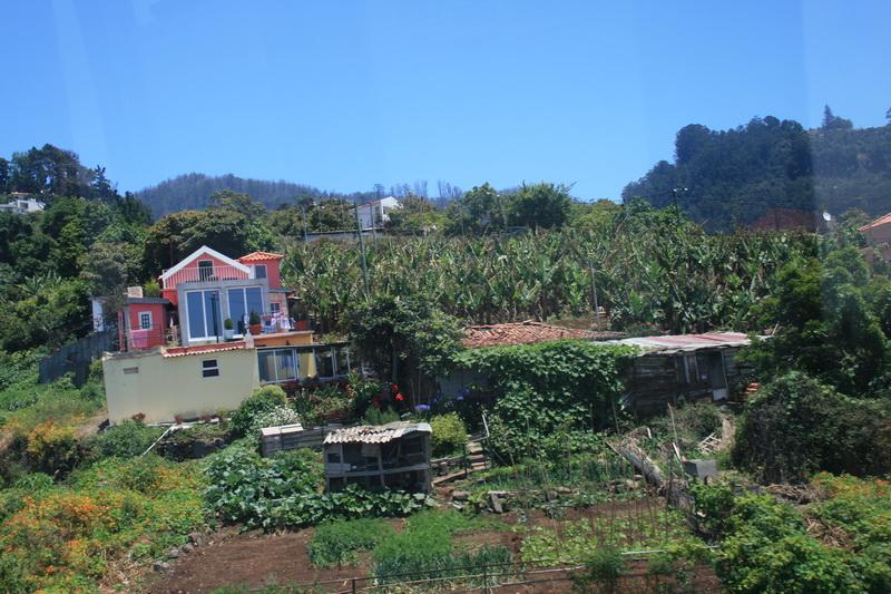 Arke-Madeira-299