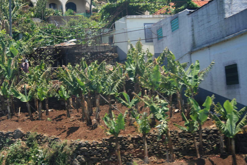 Arke-Madeira-301