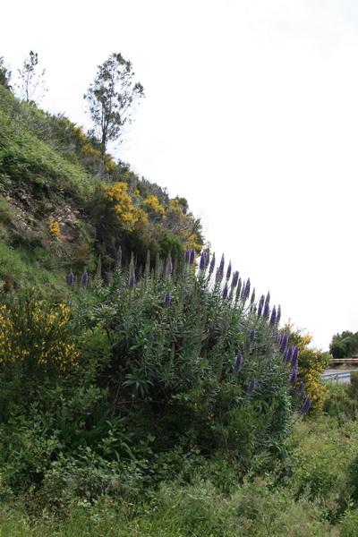 Arke-Madeira-338