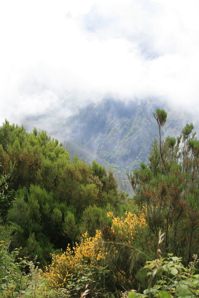 Arke-Madeira-339