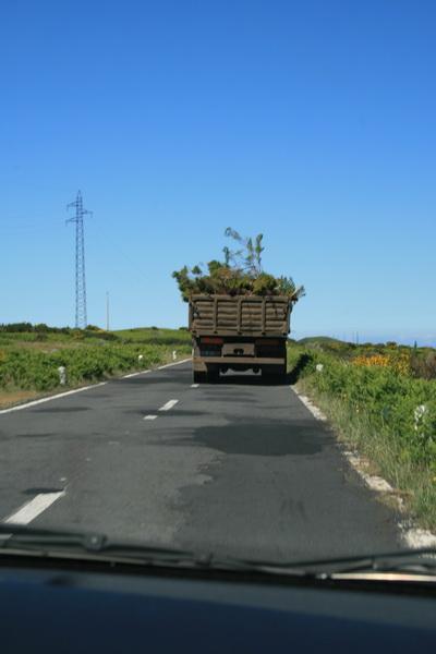 Arke-Madeira-351