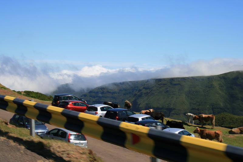 Arke-Madeira-359