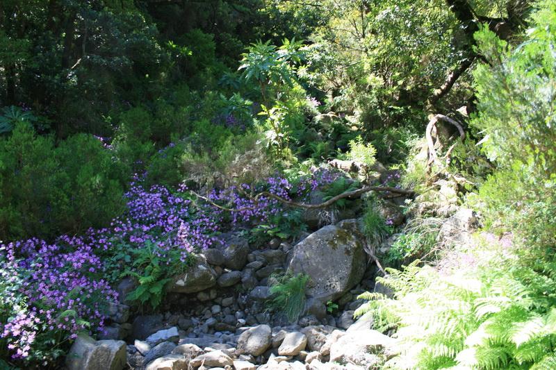 Arke-Madeira-361