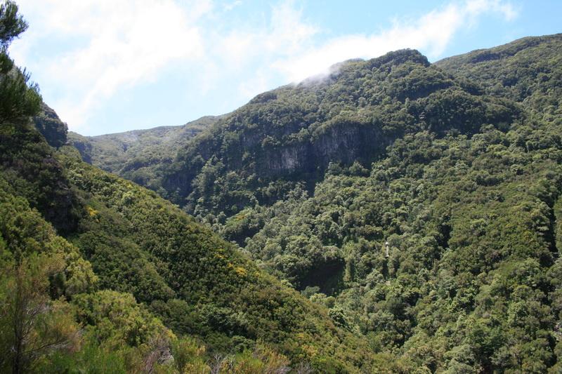 Arke-Madeira-384