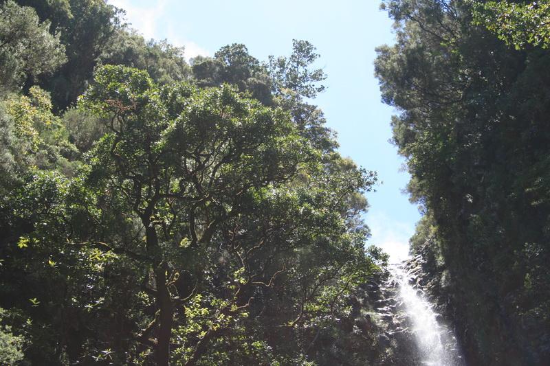 Arke-Madeira-403