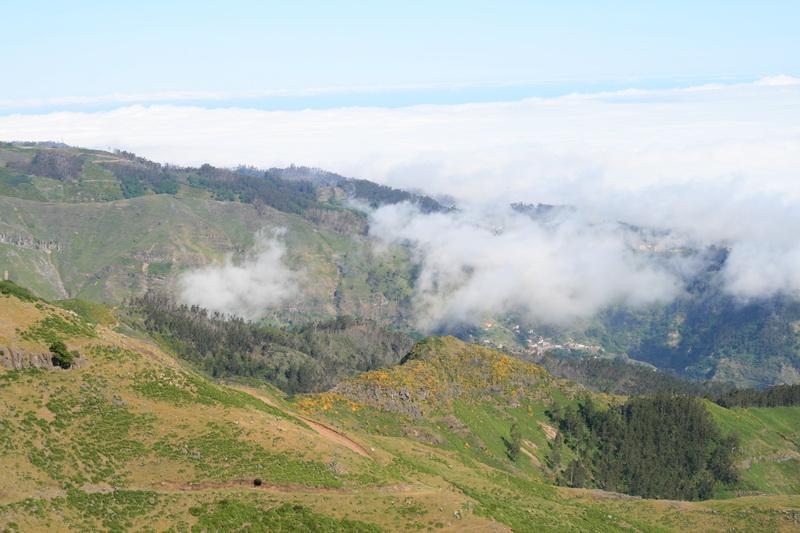 Arke-Madeira-443