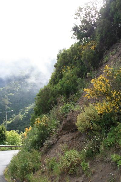 Arke-Madeira-469