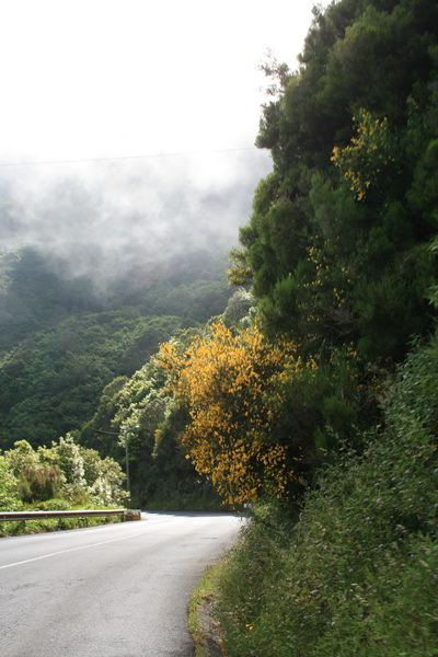 Arke-Madeira-470