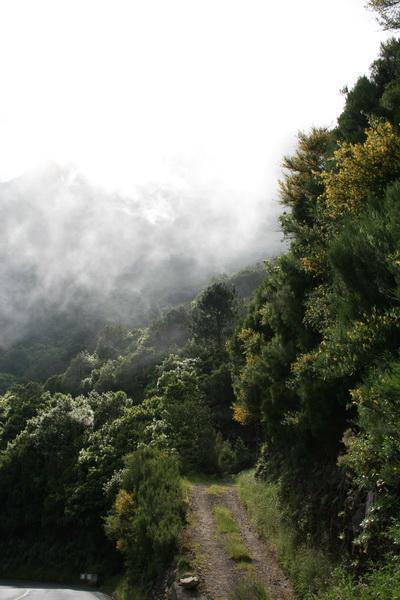 Arke-Madeira-471