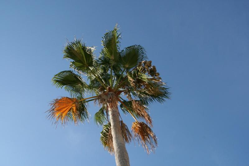 Marbella-2010-001
