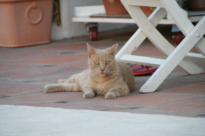 Marbella-2010-018