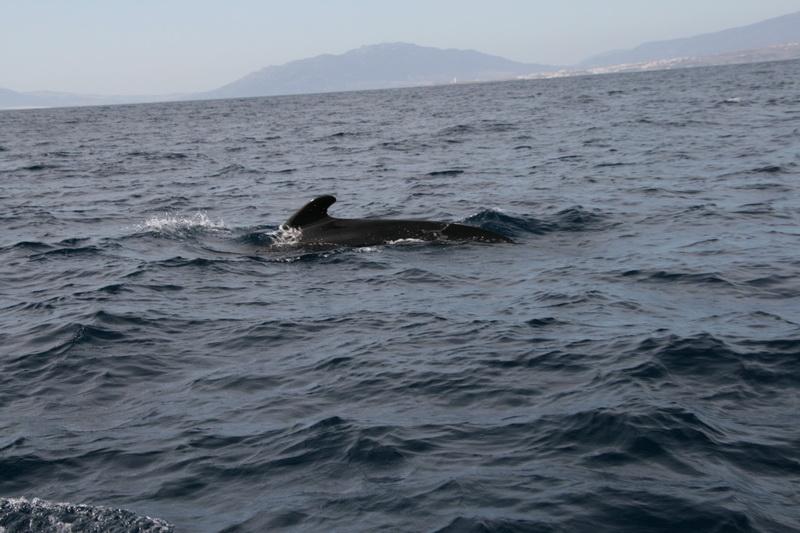 Marbella-2010-105